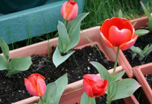 бонсай: выращивание и уход в домашних условиях